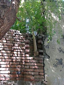 tree..brick wall